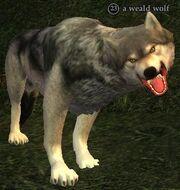 A weald wolf