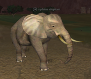 A plains elephant