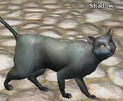 Shadow (East Freeport)