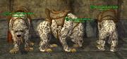 Dire Bear (Berserker) Placed
