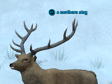 A northern stag