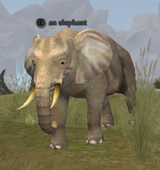 An elephant (Commonlands)