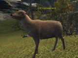 A backwoods doe