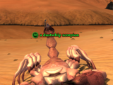 A dustwhip scorpion