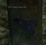 A young sewage viper