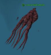 A colossal frigid cuttlefish