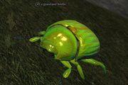 Grassland beetle
