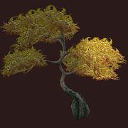 Golden-vesspry-oak