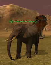 A Bloodskull war elephant