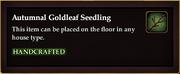 Autumnal Goldleaf Seedling