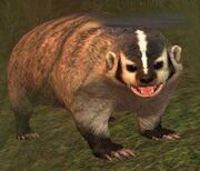 Race badger
