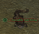 A crocodile hatchling