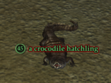A crocodile hatchling