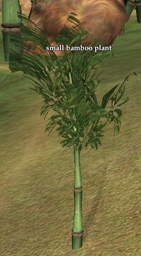 Small bamboo plant