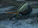A cave locust