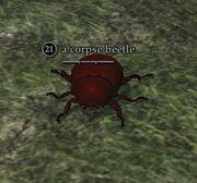 A corpse beetle