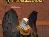 A Blacktalon watcher (solo)