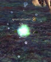 Ignus cultivator