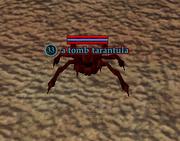 A tomb tarantula