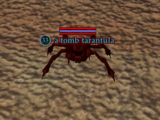 A tomb tarantula (The Tombs of Night: A Search For Answers)
