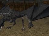 A juvenile drakota