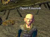 Ognit Eznertob