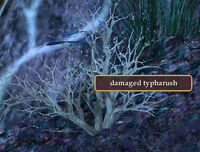 Damaged-typarush