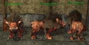 Boar (Guardian) Placed