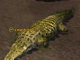 A marsh stalker