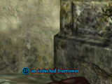 An infected burrower
