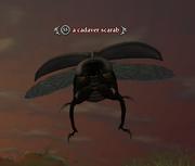 A cadaver scarab