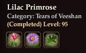 Lilac Primrose