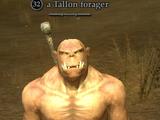A Tallon forager