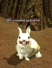 A sandtail jackrabbit (Zek)