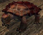 Turtle plushie (Visible)