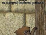 An escaped kadaren primate