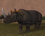 A bull rhinoceros