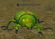 A small emerald beetle