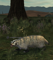 A timber badger