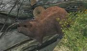 A torrent beaver