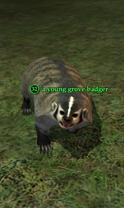 A young grove badger