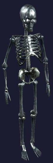 a human skeleton display < a human skeleton display > | everquest, Skeleton