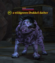 A wildgrown Drakkel dasher
