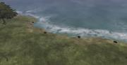 Seamist Coast