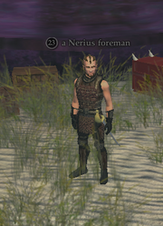 A Nerius foreman