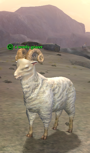 A wooly grazer