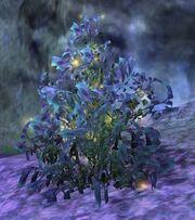 Glisten frill bush
