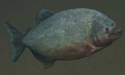 File:Race piranha.jpg