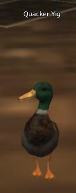 Quacker Yig vis