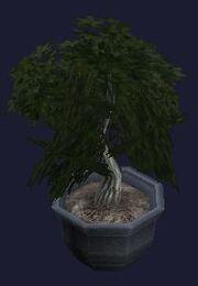A harmonious bonsai (visible)